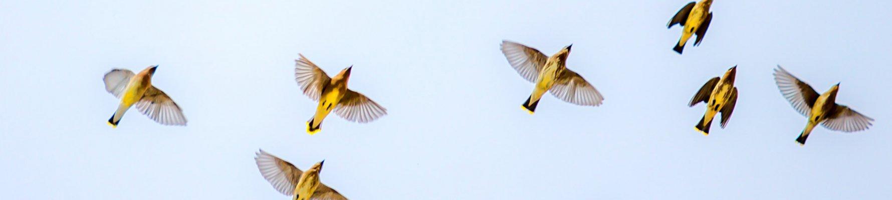 vogels_web